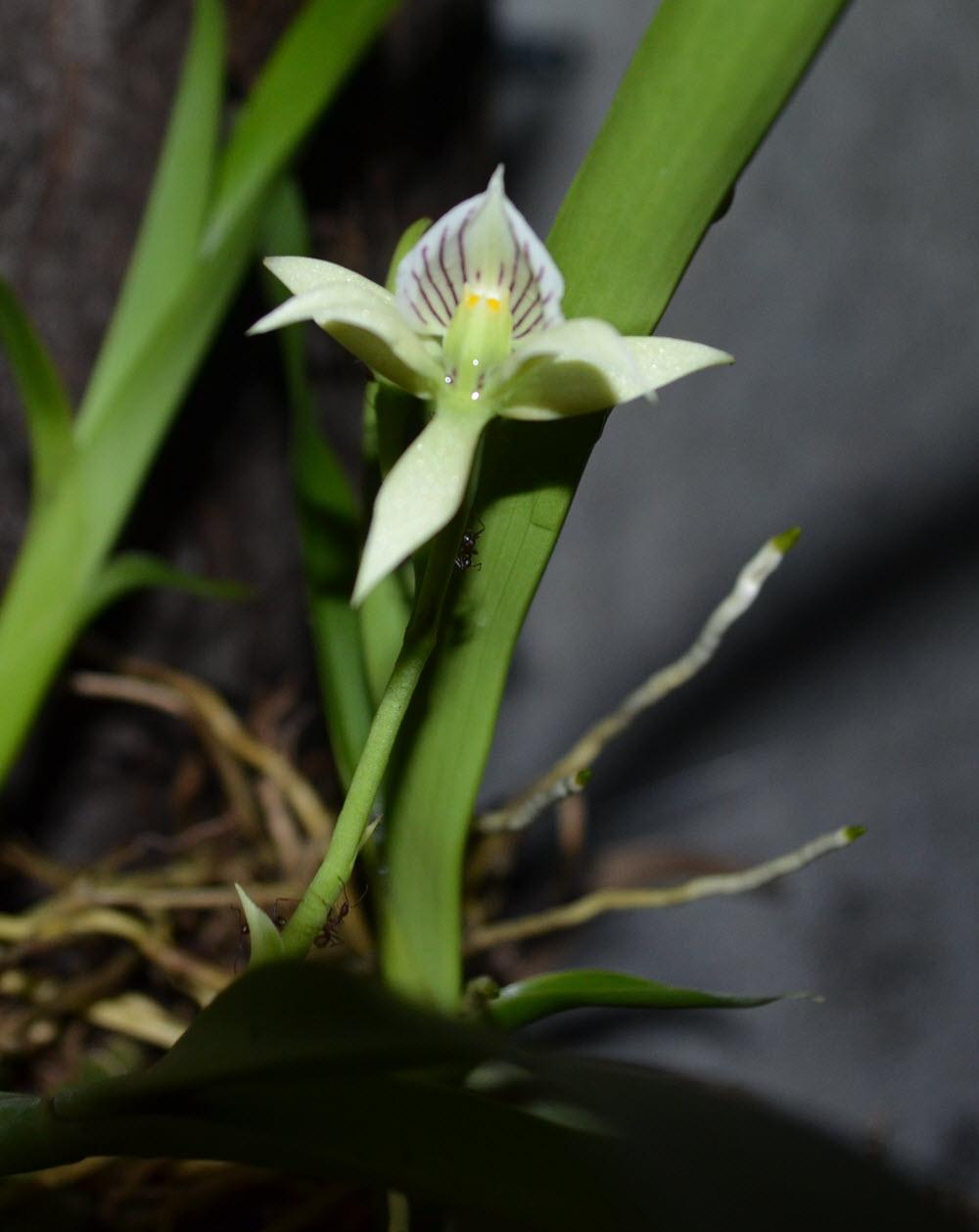orkidee 2