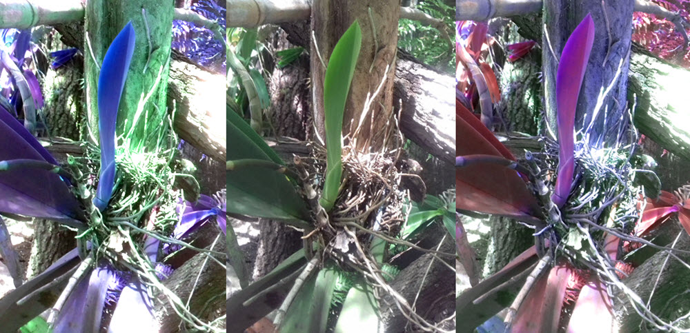 orkide kost